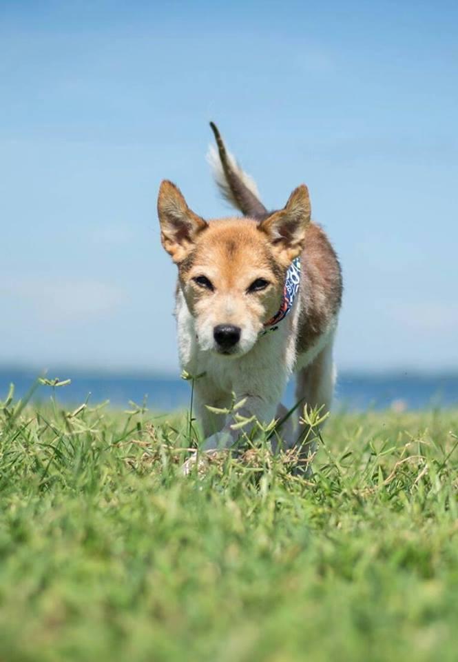 dog running through the grass near the coast