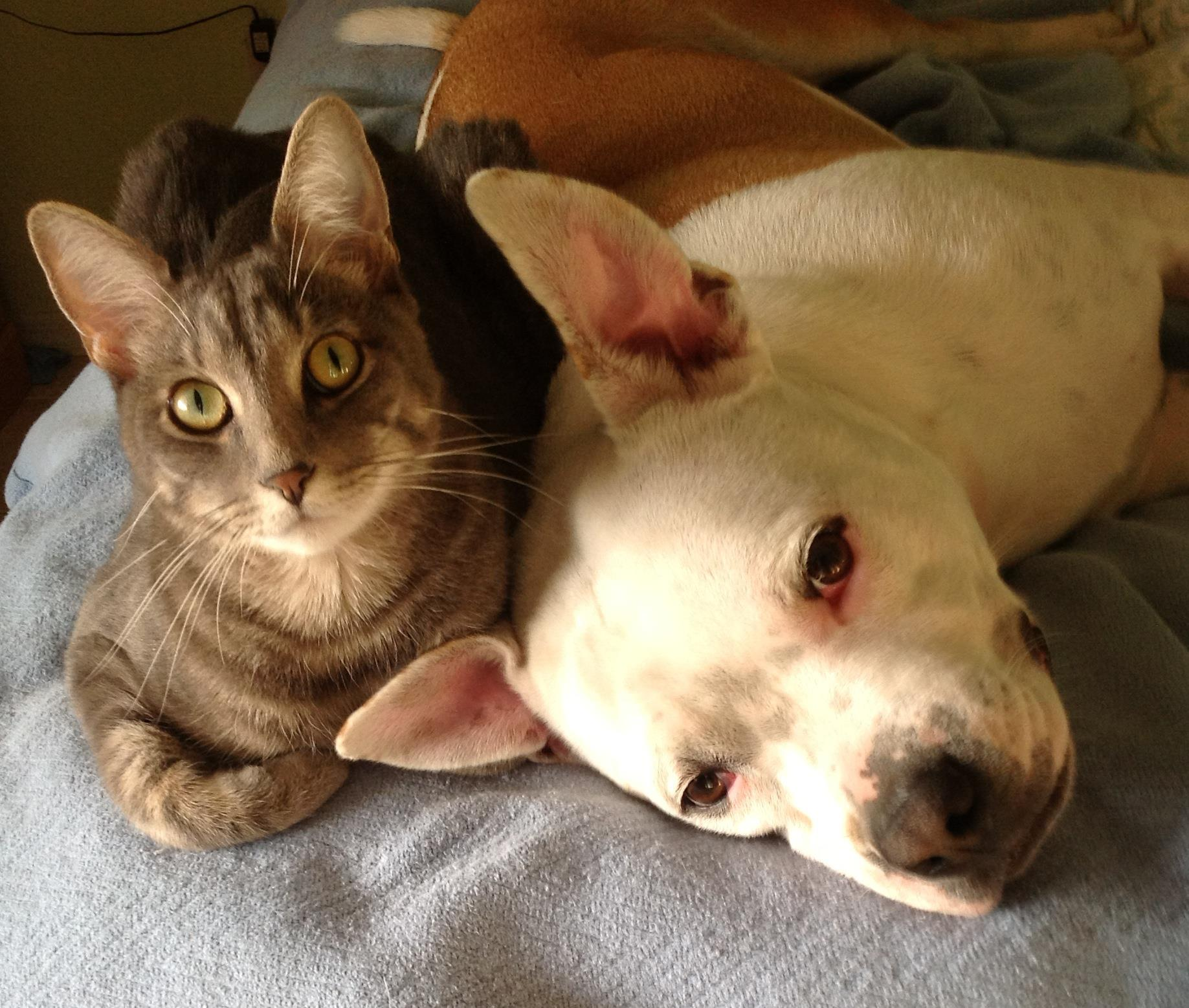 cat and dog cuddling in bed