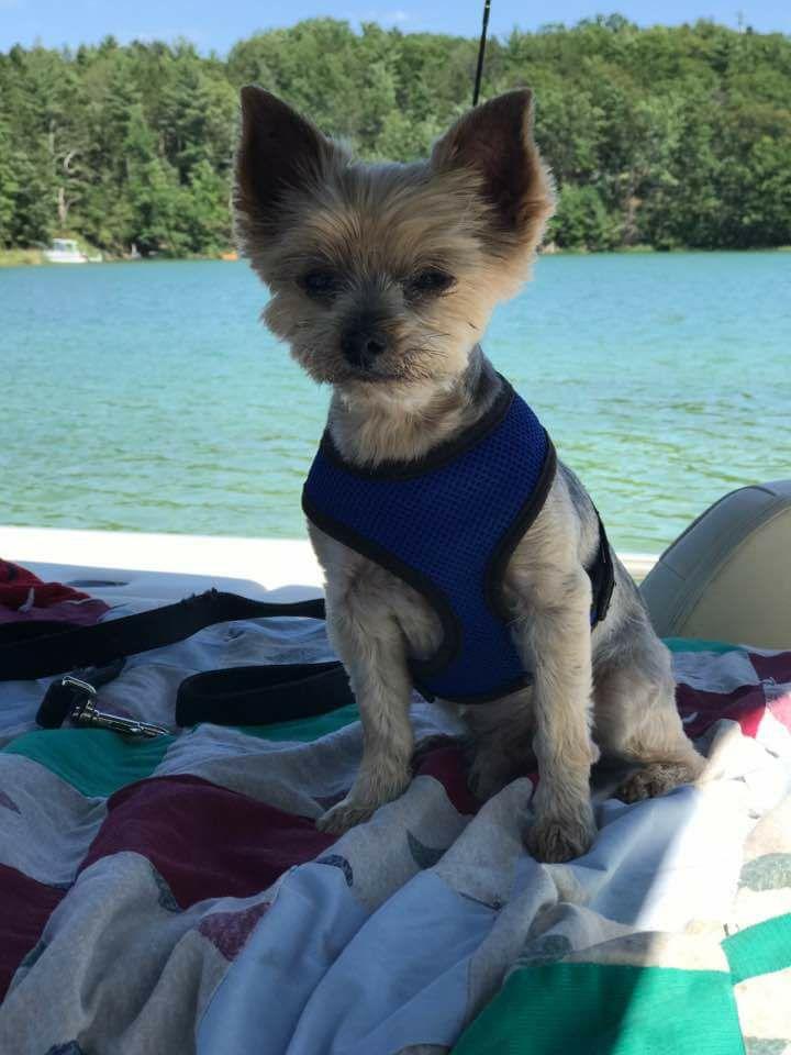 small mix dog sitting on boat